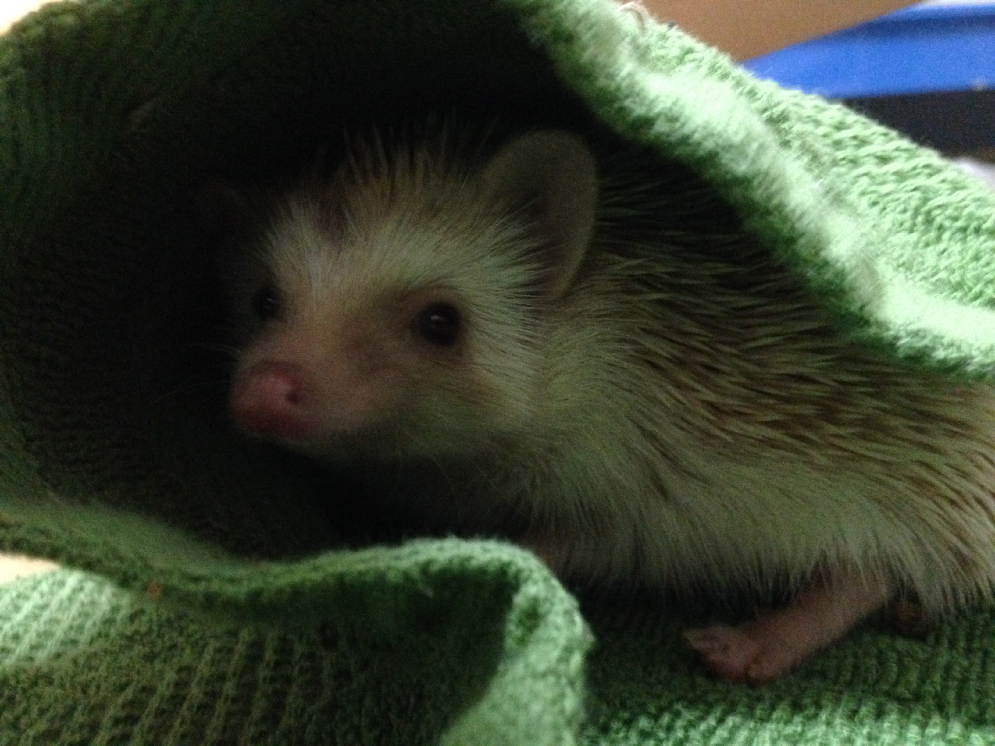 It's hard not to love a hedgehog