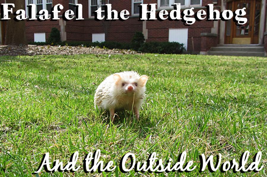 falafel-hedgehog-outside--title