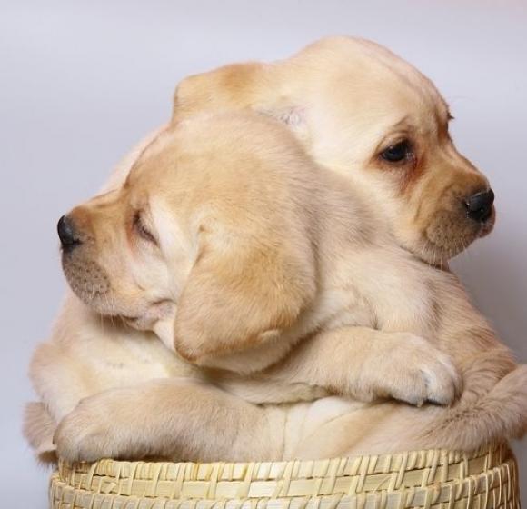 l-Puppy-Hugs